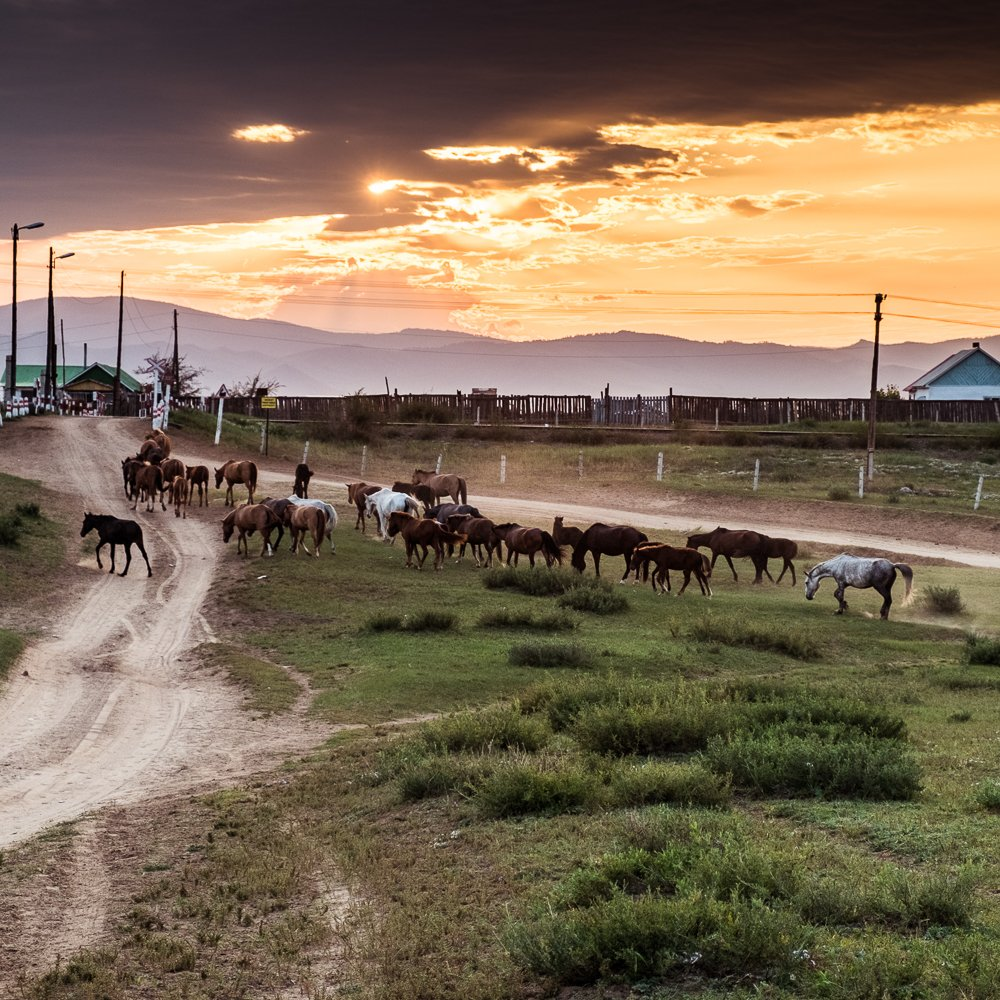 Living and teaching sustainable farming in Northern Mongolia