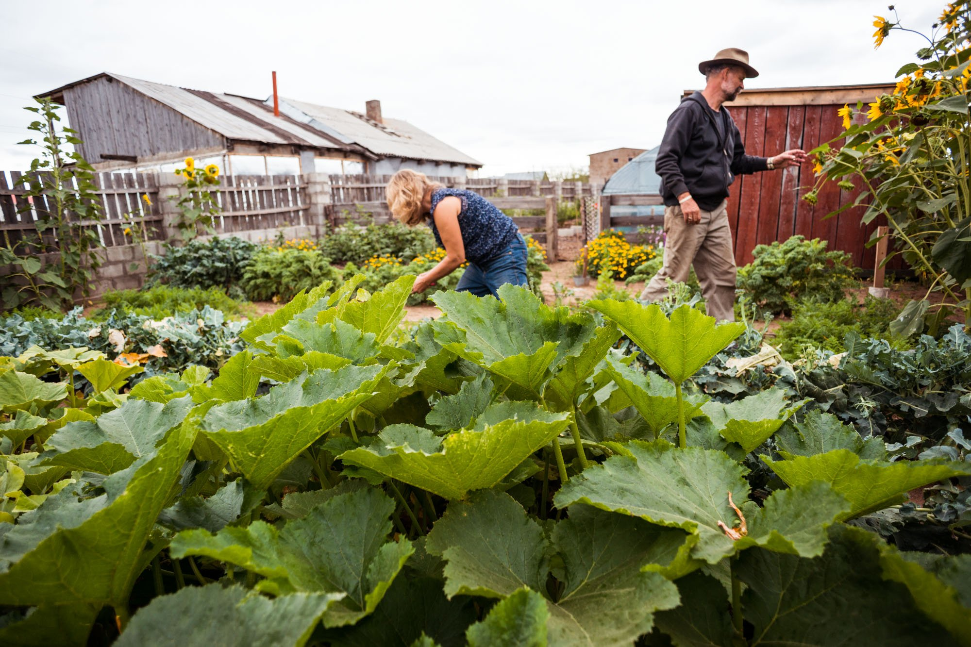 Rob and Marlene gardening in Sukhbaatar, Mongolia